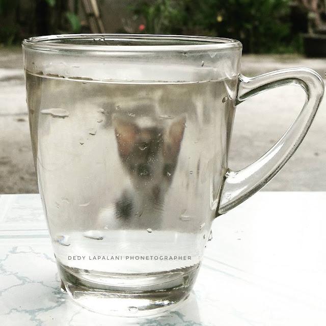 air putih untuk mengatasi bau mulut yang tidak sedap