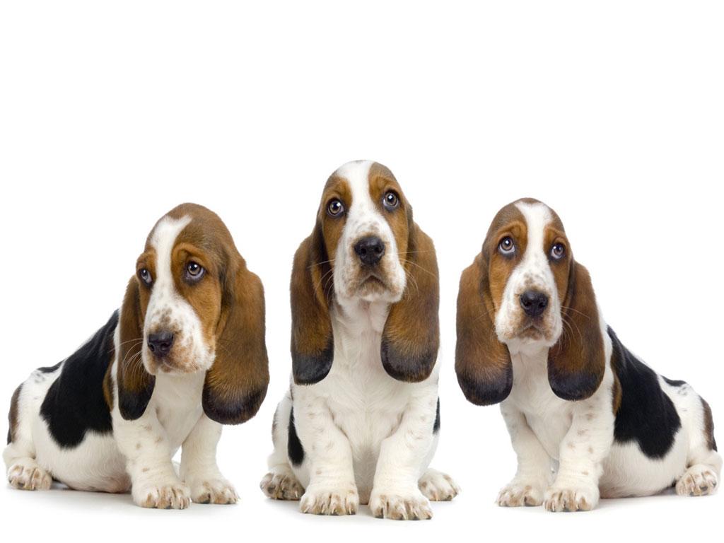 pet shop  Nomes de Cães Macho com a Letra B