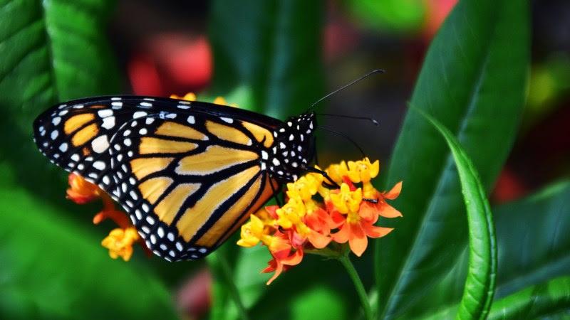 3rd Butterfly
