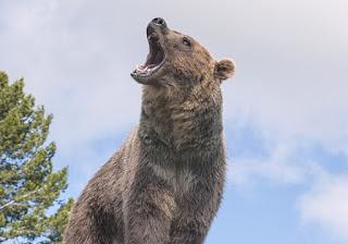 Strategi terbaik menghadapi market bearish
