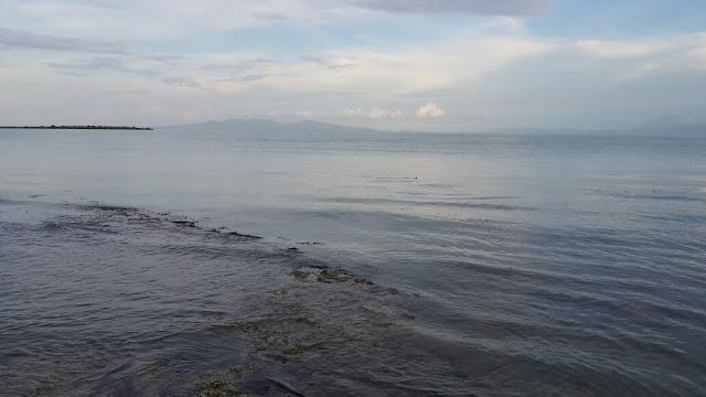 Hamparan rumput laut di pantai alami