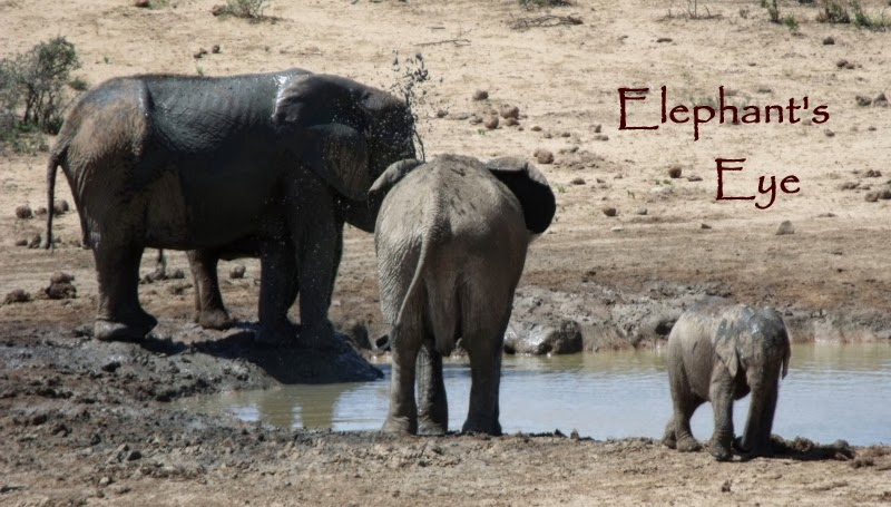 Young Addo elephants at the water