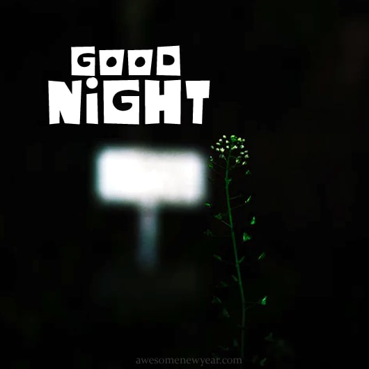 Best Good Night Images Photos And Pictures For Free Download