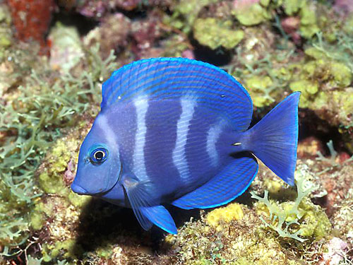 Rare Tropical Saltwater Fish World Visits: T...
