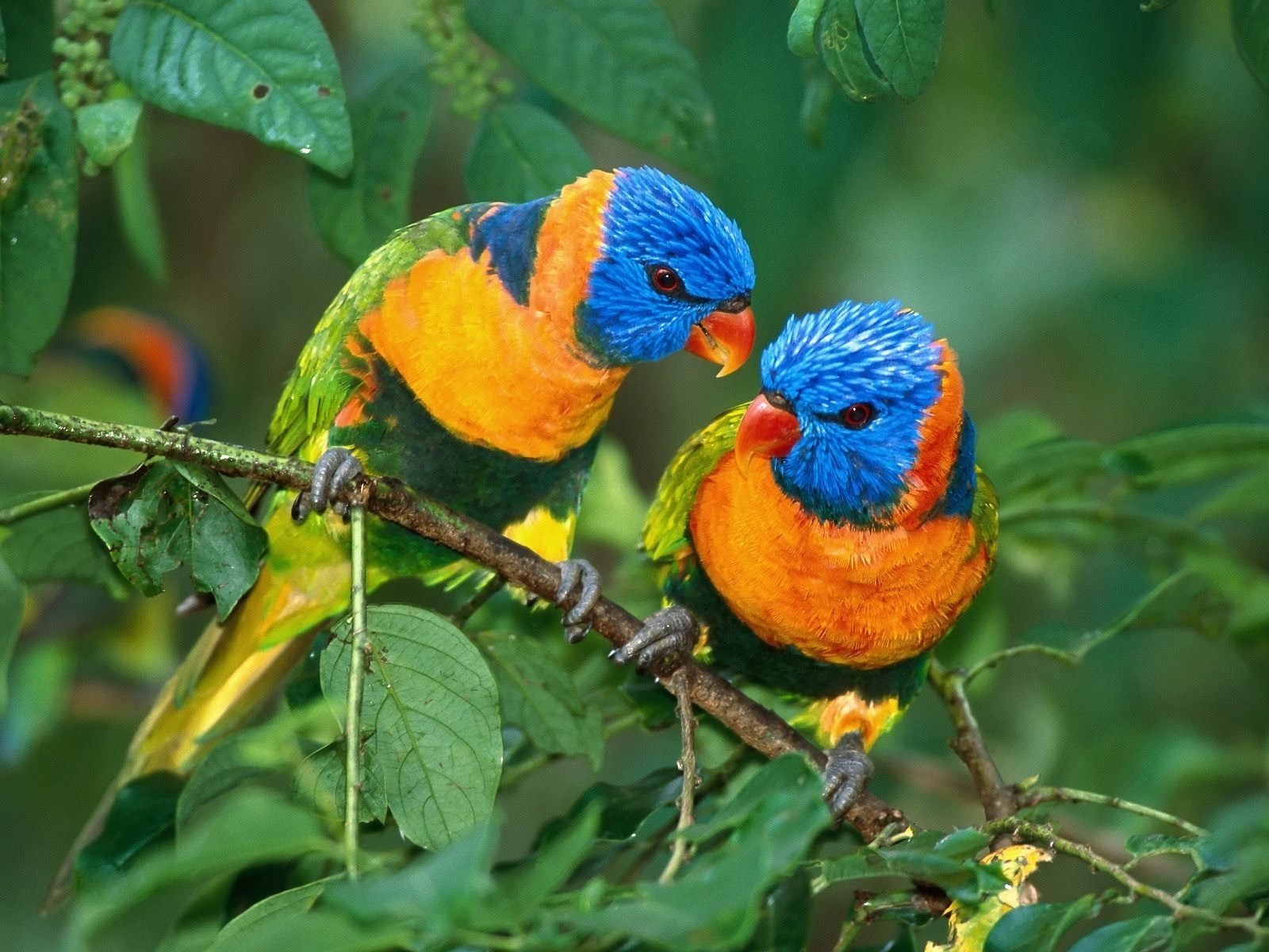 Two Cute Baby Birds Wallpaper