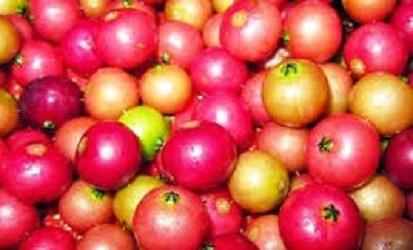 manfaat buah ceri untuk wajah,manfaat buah ceri,manfaat buah ceri kersen,manfaat buah ceri kampung,manfaat buah ceri untuk kesehatan,khasiat dan manfaat buah ceri untuk kesehatan,manfaat buah seri,manfaat untuk kesehatan,manfaat buah,kesehatan,manfaat buah kersen ceri untuk kesehatan,manfaat buah kersen atau ceri untuk kesehatan anda,manfaat buah buahan,buah kersen,manfaat buah ceri bagi kesehatan