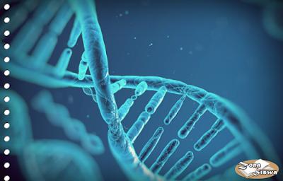 DNA, Apa itu DNA, Pengertian DNA, Definisi DNA, Fungsi DNA, Perbedaan DNA dan RNA, Struktur DNA.