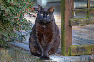 All Wallpapers Fat Black Cats