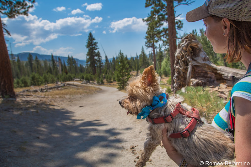 Dog-Friendly Devils Postpile National Monument Things to Do in Mammoth in Summer