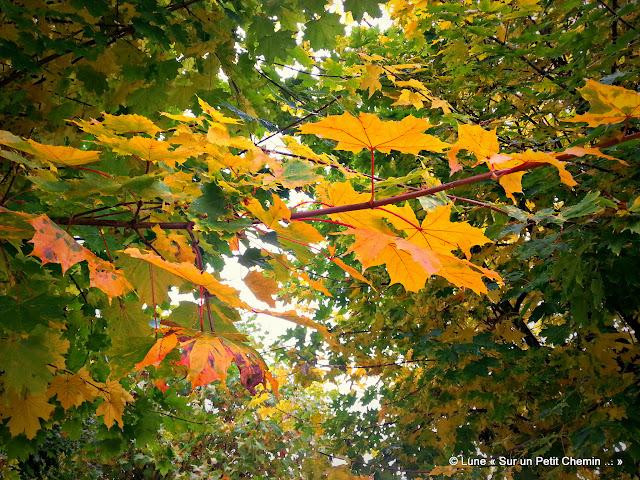 Feuillage d'automne © Lune « Sur un Petit Chemin ... »