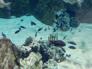 リヴォルノ水族館の魚