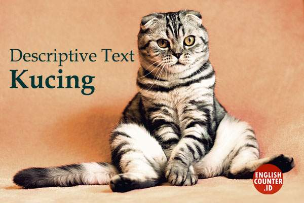 Contoh Descriptive Text About Animal Kucing