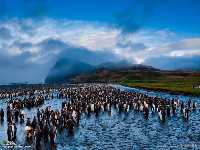 National Geographic Wallpapers Photography Penguins
