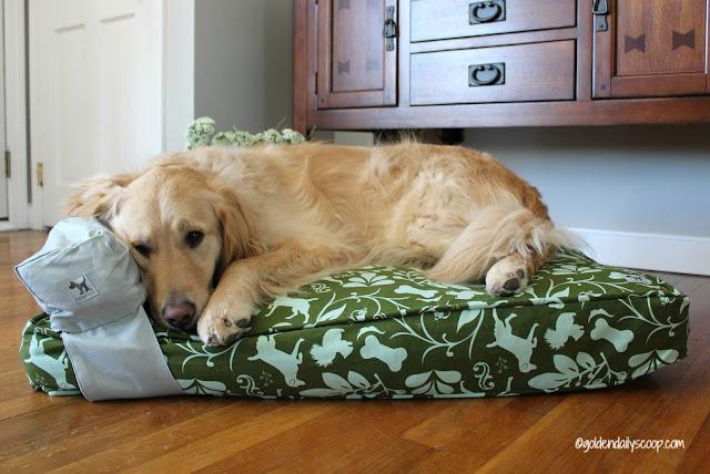 golden retriever dog sleeping on a molly mutt dog bed