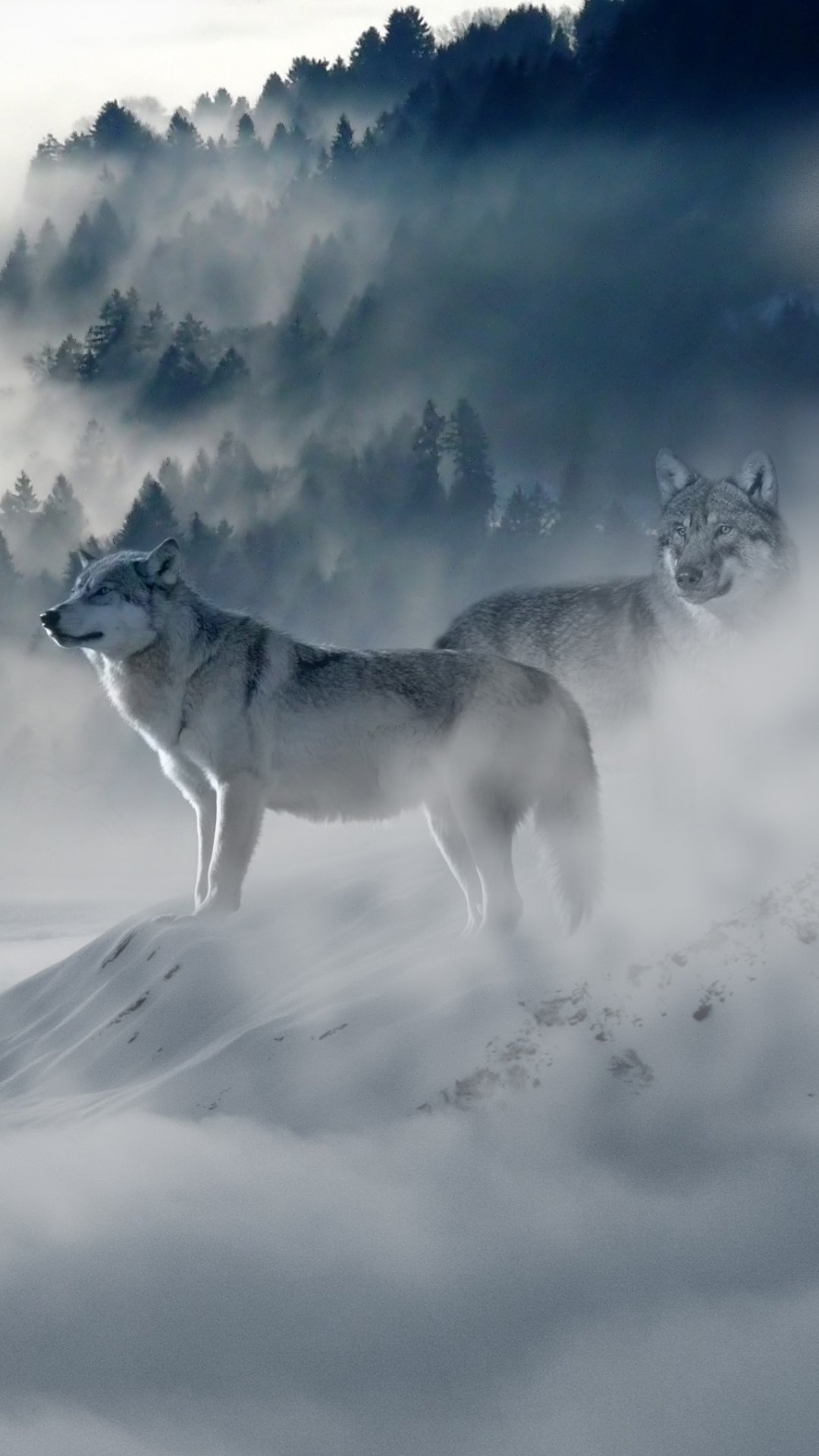 wolves wallpaper hd wallpapers