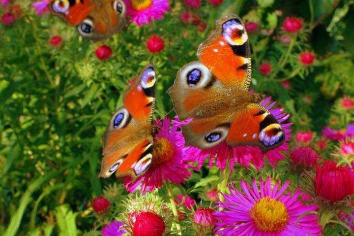 çiçek ve kelebek resimleri