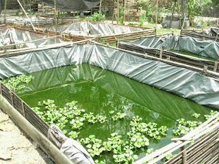 Memperhatikan kualitas air kolam