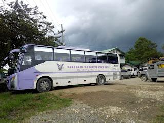 violet coda lines bus