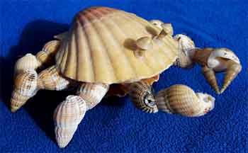 barang-barang yang berserakan di bibir pantang (cangkang kerang) dapat dibentuk menjadi konstruksi unik seperti bentuk kepiting ini. hanya dibutuhkan sedikit kreativitas dan lem tembak. unik sekali bukan?