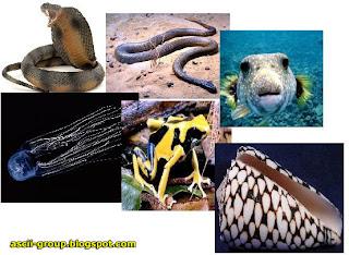 اخطر عشر مخلوقات Ten most dangerous creatures