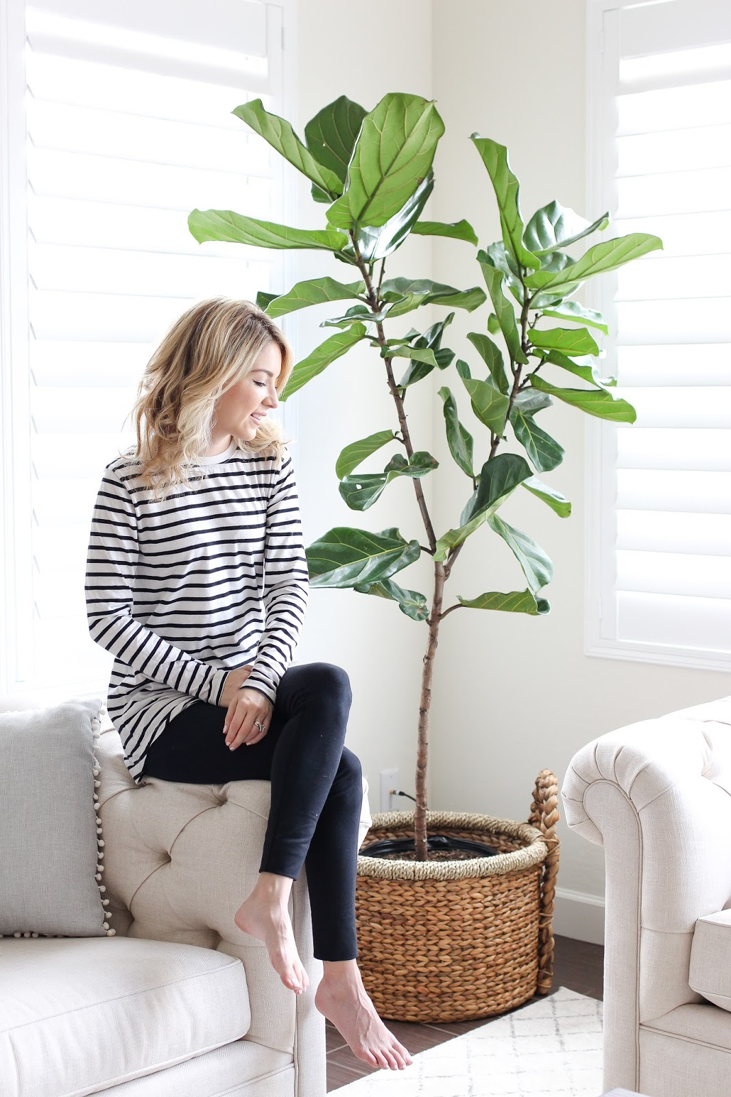 indoor plant - how to care for an indoor plant