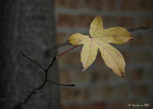 Autumn Leaf Yarn & Nail Art