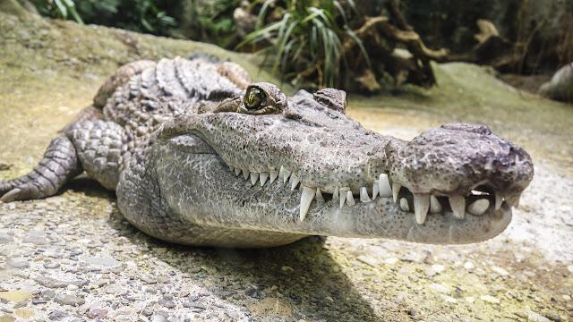 Hewan Paling Berbahaya Di Sungai Amazon