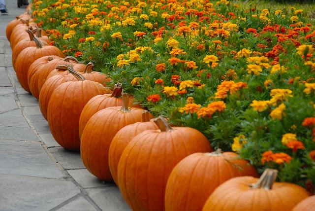 Halloween al Rossini Art Site per grandi e piccini