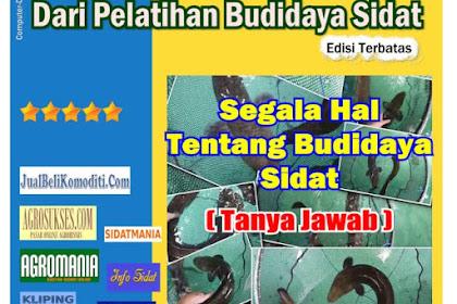 Tersedia DVD Segala Hal tentang Budidaya Sidat (Tanya Jawab) ((Kode: TJ)