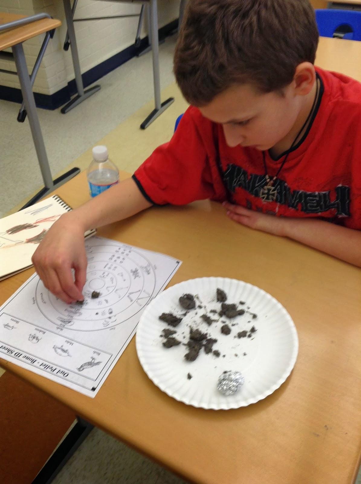 Urban Naturalists At Nathan Bishop Middle School