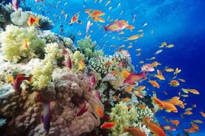 Pengertian Ekosistem, Komponen, dan Macam-macamnya
