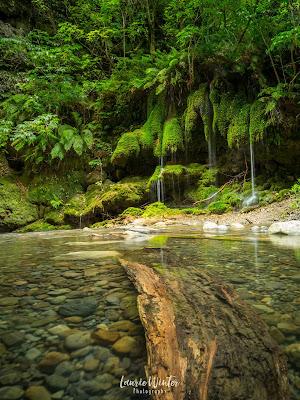 NZ, New Zealand, Wairarapa, Martinborough, Patuna Chasm, River, Moss