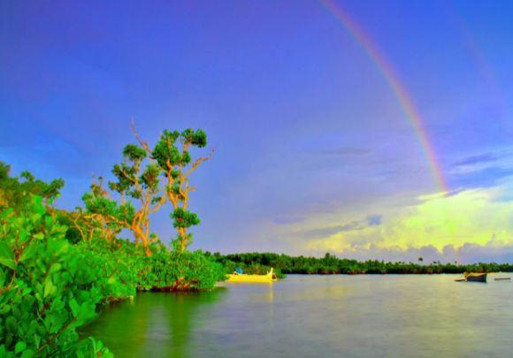 Destinasi Wisata Hutan Mangrove Baurung