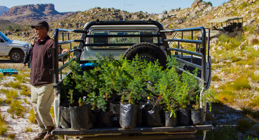 Bushmans Kloof Cederberg, South Africa: Annual Cedar Tree Planting