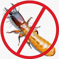anti rayap solo termitech