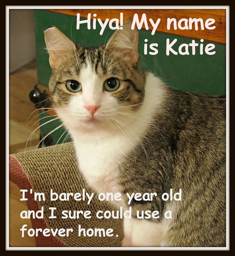 Katie needs a home