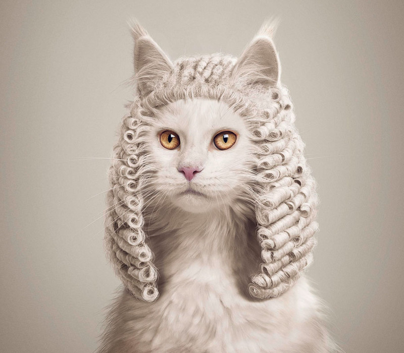 Animal Advertising: Creative Filming Art with Animals in Leading Roles