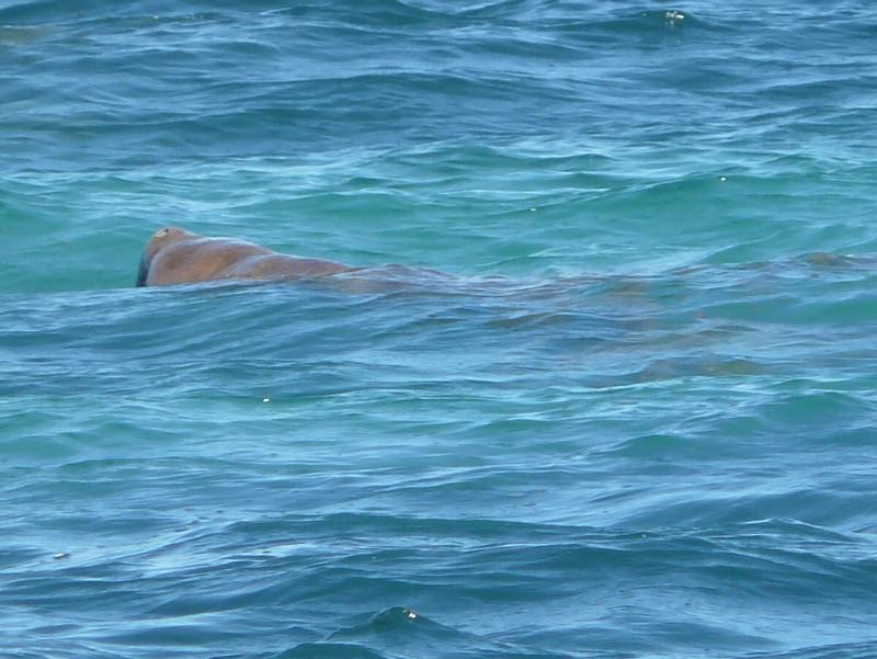 shark bay senior singles Shark bay world heritage discovery and visitor centre, denham: see 112 reviews, articles, and 36 photos of shark bay world heritage discovery and visitor centre, ranked no13 on tripadvisor among 26 attractions in denham.