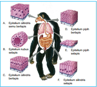 90 Gambar Organ Tubuh Hewan Vertebrata HD