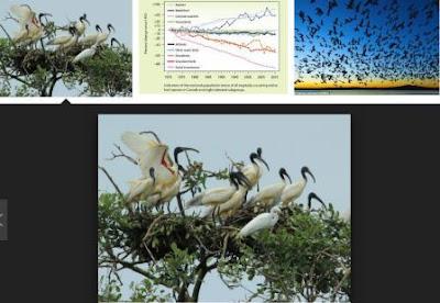 Pembahasan Komponen Ekosistem dan Interaksi Makhluk Hidup dengan Lingkungannya