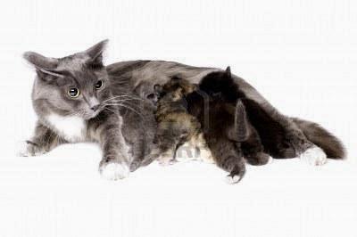 طرق التخلص من تساقط الشعر عند القطط والاسباب وكيفيه العلاج