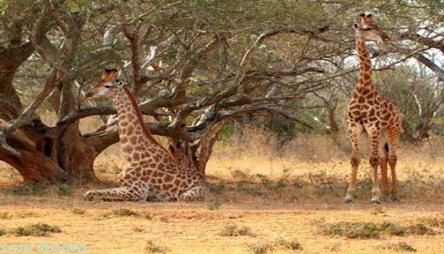 Tempat Wisata Tersembunyi Di Afrika Selatan Yang Wajib Anda Kunjungi  10 TEMPAT WISATA TERSEMBUNYI DI AFRIKA SELATAN YANG WAJIB Anda KUNJUNGI