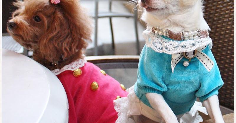 Hip Designer Dog Clothes: ♥ Happy Sunday