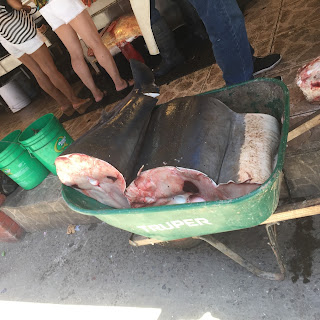 Shark meat for sale at the Ensenada Fish Market in Ensenada, Mexico