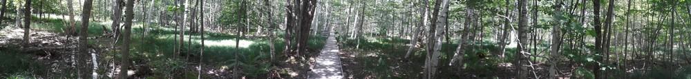 Balade dans les meadows d'Acadia National Park