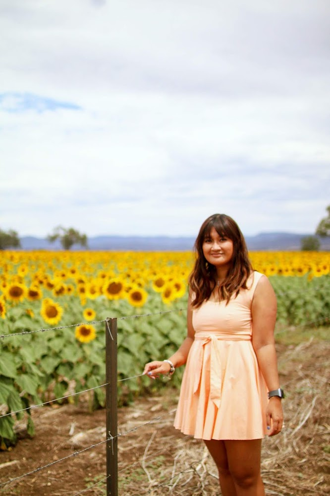 Sunflower Fields Liverpool Plains NSW