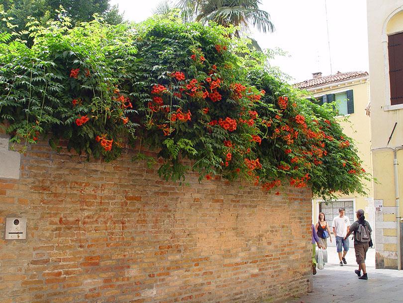 5 Reasons to Visit Venice: Romance and the Arts in Italian Veneto