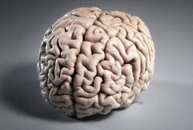 creierul este cel mai predispus la dezhidratare