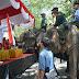 Atraksi Gajah, Drama Kolosal dan Pawai DrumBand Hibur Masyarakat Langkat