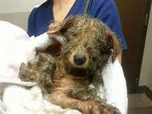No dog deserves such treatments and cruel acts!